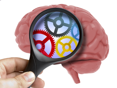 Human Brain Analyzed with magnifying glass cogwheels working inside isolated on white Stock Photo