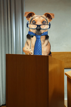 Business dog wearing tie and glasses having public speaking at Podium pulpit with microphone