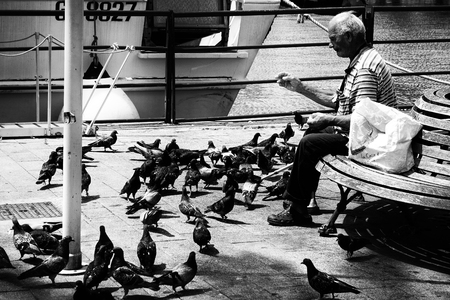 Genoa, Italy - June 2015: Poor elderly lonely man sitting on bench and feeding pigeons 報道画像