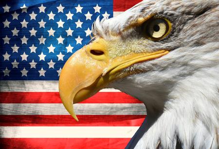 Eagle portrait closeup symbol over usa or us stripes and stars flag