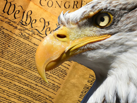 Eagle portrait closeup symbol over american constitution