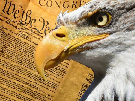 Simbolo del primo piano del ritratto dell'aquila sopra la costituzione americana