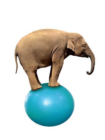 Elephant Funambulist Balance Ball isoliert auf weiss Standard-Bild