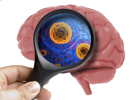 Human Brain Analyzed with magnifying inside isolated on white