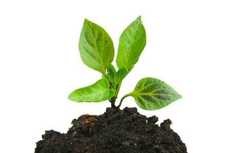 Growing young green plant and soil isolated on white Reklamní fotografie