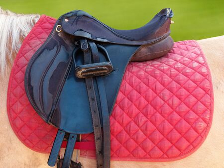 Closeup of saddle on horse