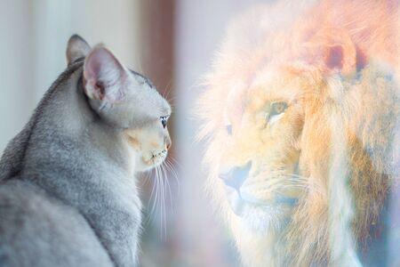 Katze schaut in den Spiegel und sieht sich als Löwe. Selbstwertgefühl oder Wunschkonzept.