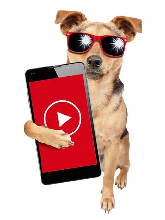 Funny dog influencer celebrity wearing sunglasses and under money dollars rain video content creator holding mobile phone isolated on white background