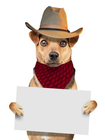 Funny cute dog wearing bandana e cowboy hat holding blank paper isolated on white Stock Photo