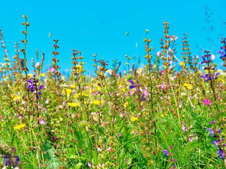 wildflowers in the field in summer