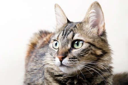 pete: baby cat