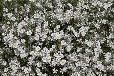 Blanket of white Stok Fotoğraf