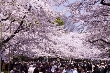 Flower viewing of Ueno-koen Park in Tokyo Stock Photo - 13265760