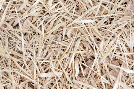 Delivering dry leaf pile each fall on the floor Stock Photo - 8956057