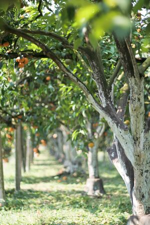 Prevención de musgo en orange la pintura naranja Foto de archivo - 9086193