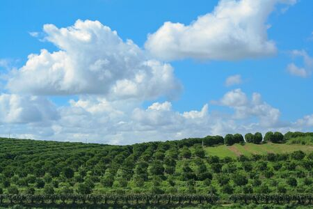 Farms, fruit orchards and the sky. Clear atmosphere amidst the mountains and the sky is refreshing beautiful
