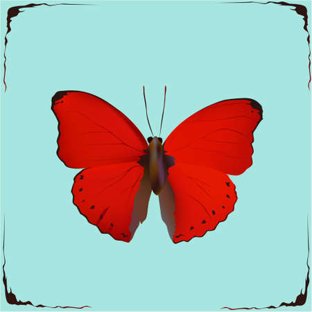 Red Butterfly, vector illustration graphic nature design