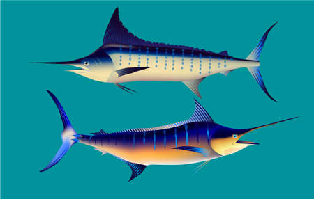 Marlin Fish, vector illustration water blue wildlife