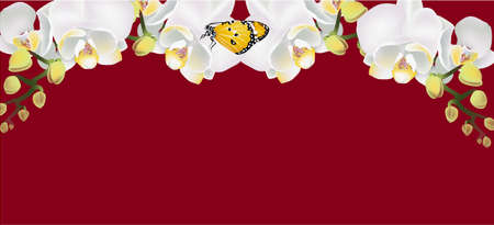 White orchid and Butterfly Banner, vector flower Stock Illustratie