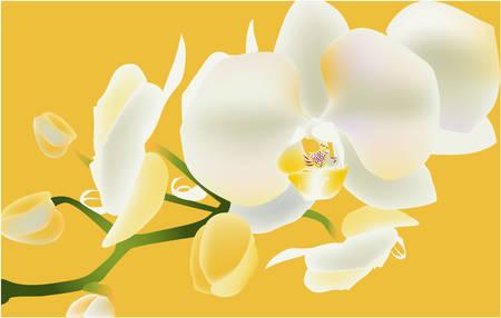 White orchid, vector illustration flower tropic romantic Illustration