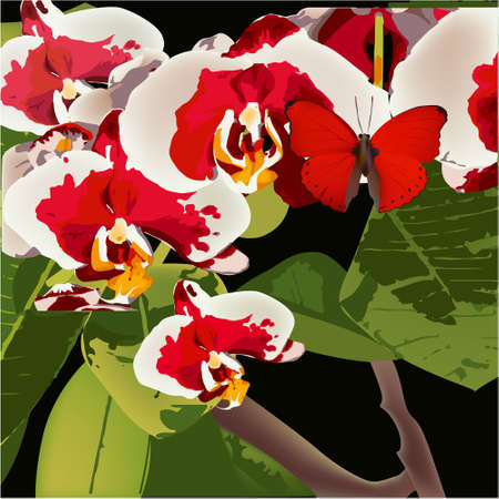 Orchid and Butterfly, vector floral exotic tropical Illusztráció