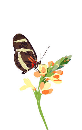 Butterfly and flower, vector summer floral bloom