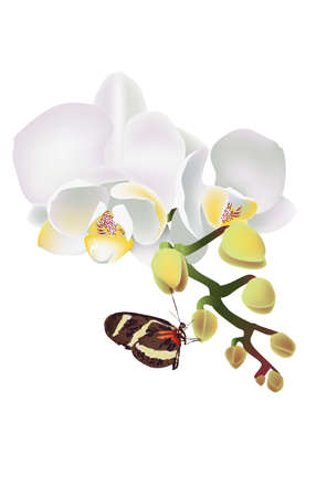 White orchid and butterfly vector, summer floral