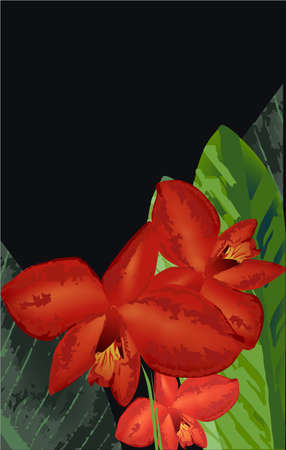 Red Orchid and leaves, exotic bloom spring