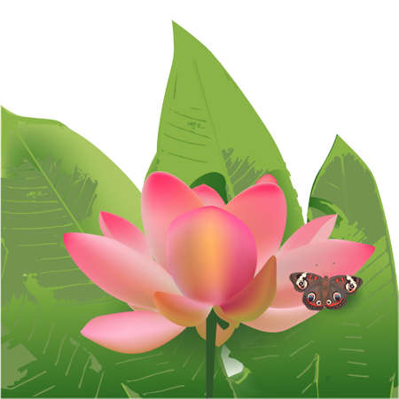 Lotus and leaves butterfly tropic exotic pink Stock Photo - 126265046