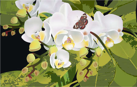 Exotic flower, butterfly orchid leaves tropic insect Stock Photo - 126265237