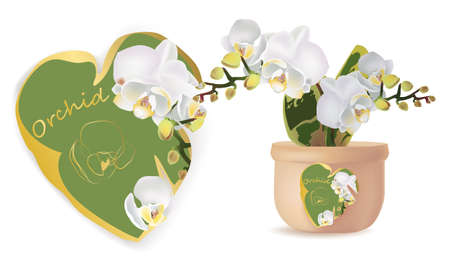 Price tag design for Orchid. Orchid in a vase with price tag on a white background