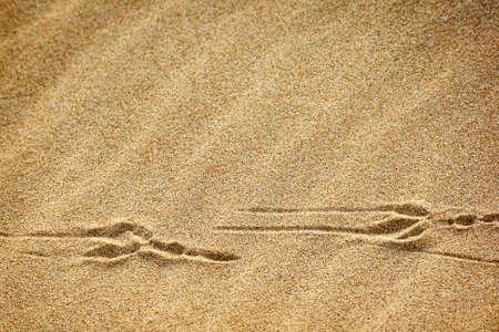 vogelspuren: Vogelspuren im Sand