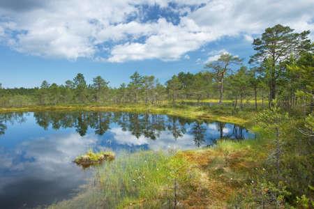 bogs: Viru bogs at Lahemaa national park Stock Photo