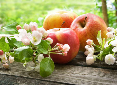 old tree: Apple with flowers on wooden board outdoors
