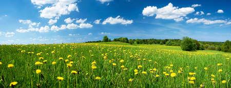 campo de flores: Campo con dientes de le�n y cielo azul Foto de archivo