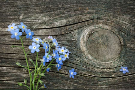 Forget-me-not flowers on wooden surface photo