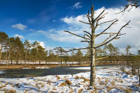 bogs: Bogs in early spring