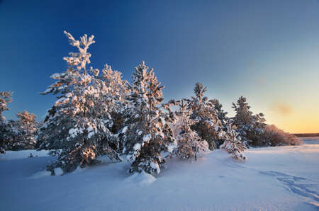 snowscape: Evening landscape in winter
