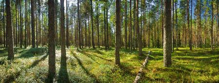 Lahemaa national park forest