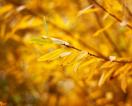 Autumnal leaves with shallow depth of field photo