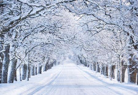 invierno: Callejón en la mañana de nieve Foto de archivo