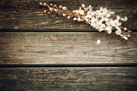 木製の背景に桜の花