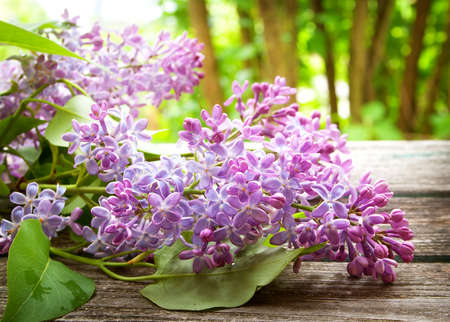 Lilac flowers on wooden background