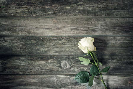 withe: withe rose on old rustic wooden background