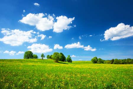 タンポポの黄色と青い空のフィールド