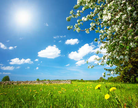 happyness: Field with yellow dandelions and blue sky Stock Photo