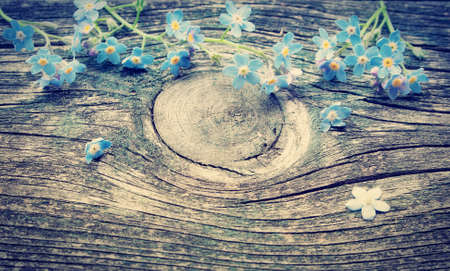 forget me not: Forget-me-not flowers on old textured wooden surface Stock Photo