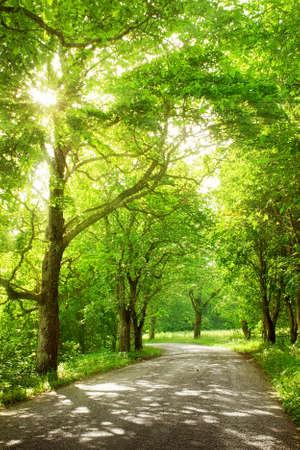 夏の間は側に木があるアスファルト道路 写真素材