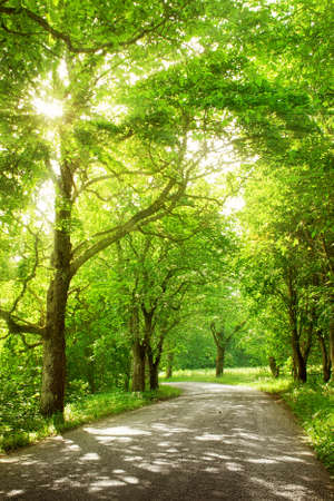 asphalt road with trees on the side in summertime