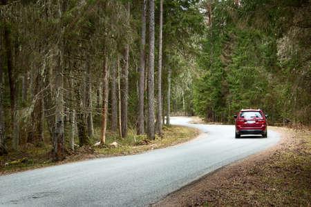 森で春の曇り日にアスファルトの道路 写真素材